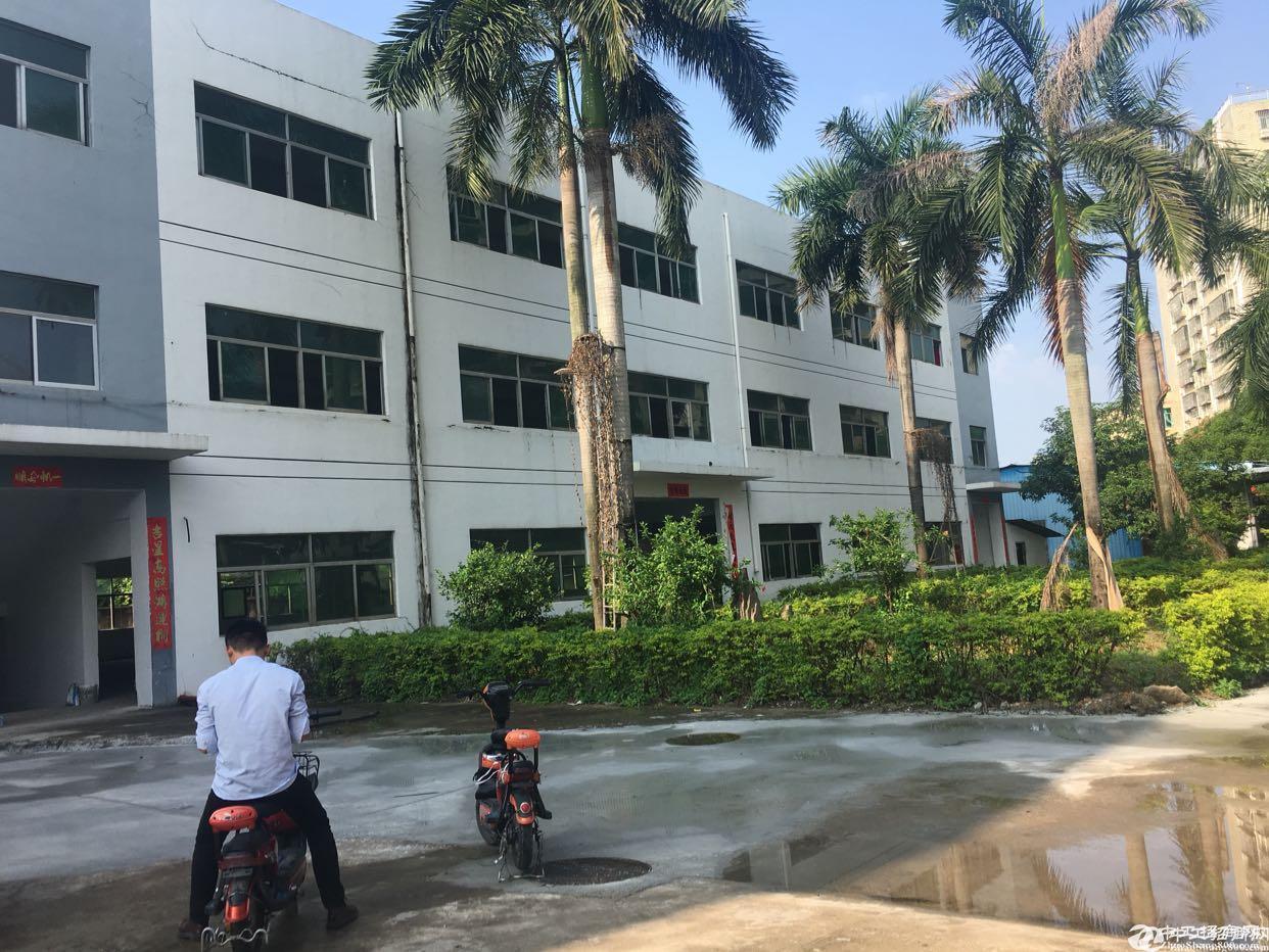 观澜福民高速公路口新出钢构8000平独门独院可以做临时仓库6米高图片2