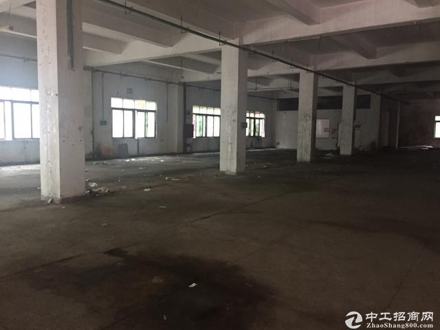 [特价]西丽留仙洞新出厂房800平 带装修 有办公室图片2