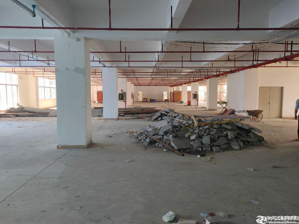 龙华大浪新出仓库1700平招租,大小面积可分100平起租。