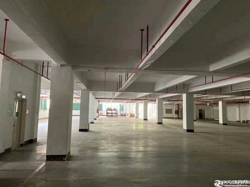厚街镇桥头村第一工业区独院标准厂房仓库招租3080m出租,形象好