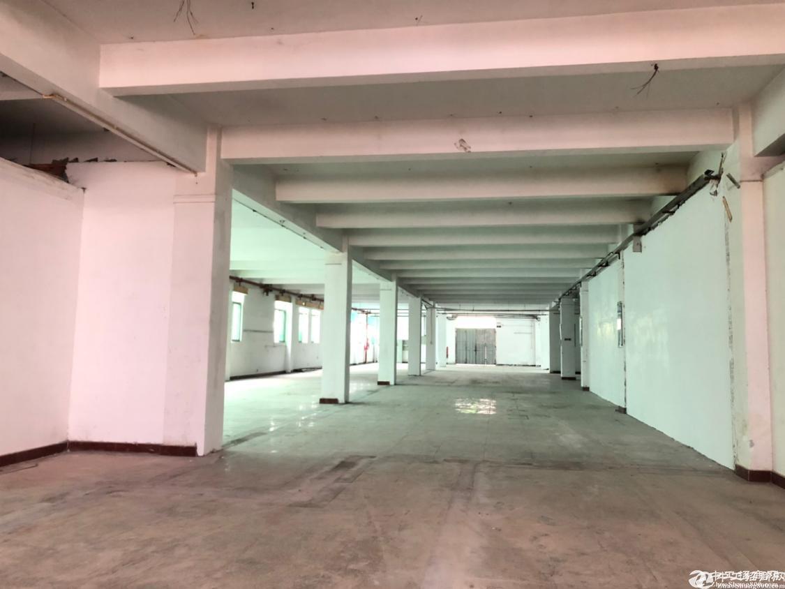 西乡鹤洲沈海高速路口新出一楼200-1500平仓库加生产厂房招租