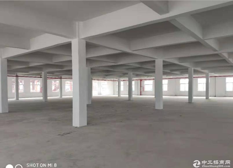 万江一楼3600平方厂房招租,可分租,高5.5米 可办环评-图2