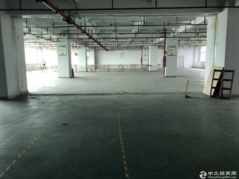 石岩花园式原房东红本厂房2600平带装修招租