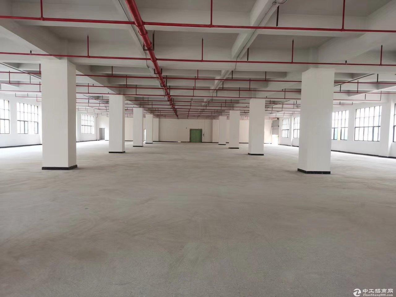石岩机荷高速出口全新厂房500平米起出售独立红本50年