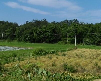 湖南大力盘活存量土地 处置闲置土地7766公顷