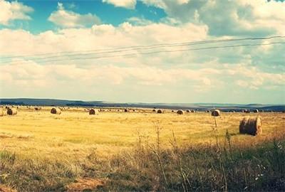 【案例】买卖农村土地(承包经营权)的法律风险有哪些?
