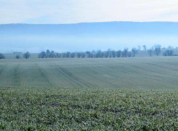 农村土地制度:私有、国有,还是改良?