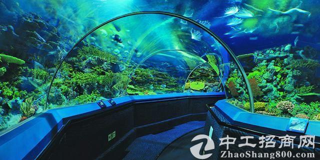 「海洋产业」王春蕊:加快发展海洋特色产业