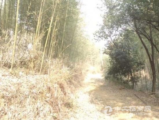 杭州余杭120亩山地出租
