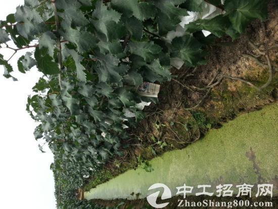 出租四川省成都市龙泉驿区龙泉街道平安场7亩葡萄园