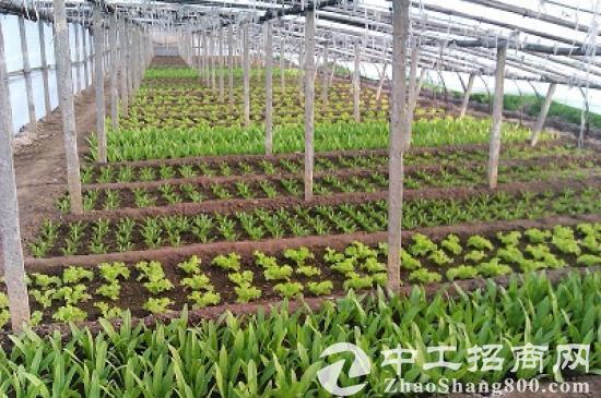 创业首选 天津17亩农场带客转让 可开发养殖