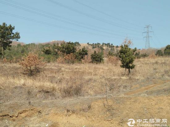 黄岛区1000亩山林转让