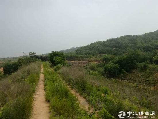 黄岛区300亩山林转让