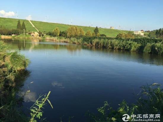 黄岛区70亩优美鱼塘转让