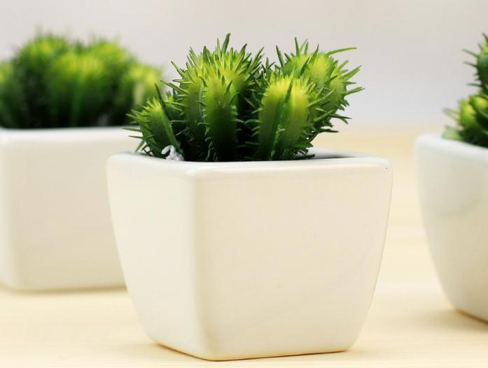 防辐射植物之仙人掌