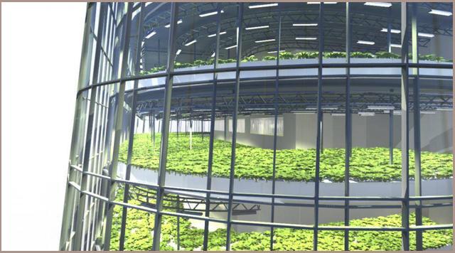 The World Food Building蔬菜田示意图.jpg