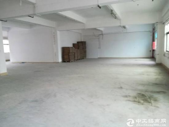 石岩料坑新出原房东1楼260平方米仓库厂房招租