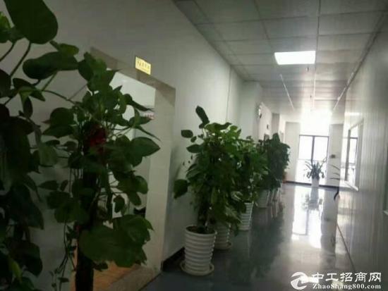 横岗厂房仓库写字楼出租100~8000平出租-图3