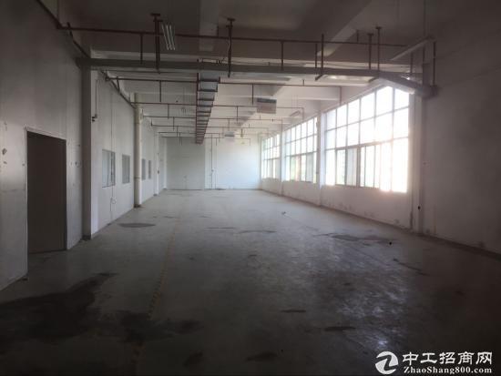坪山 石井荔景路边 新出独院厂房9000平 共三层大小分租