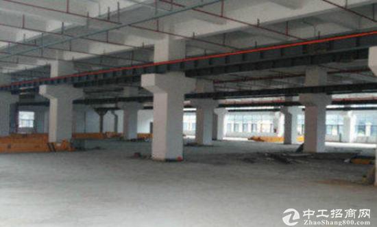 凤凰大道新出一楼800标准厂房招租,即租即用