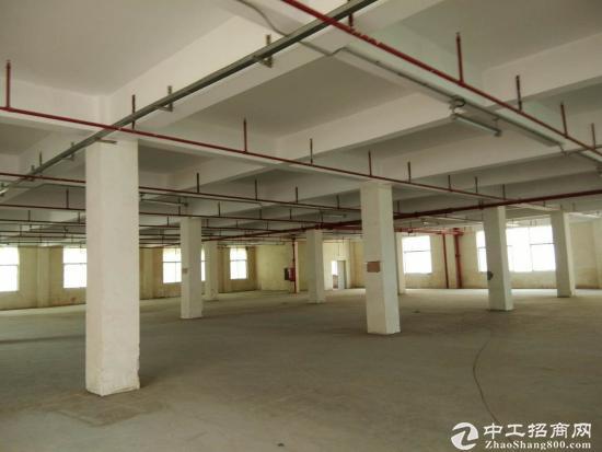 石岩塘头一楼5000平米厂房仓库出租可以分租