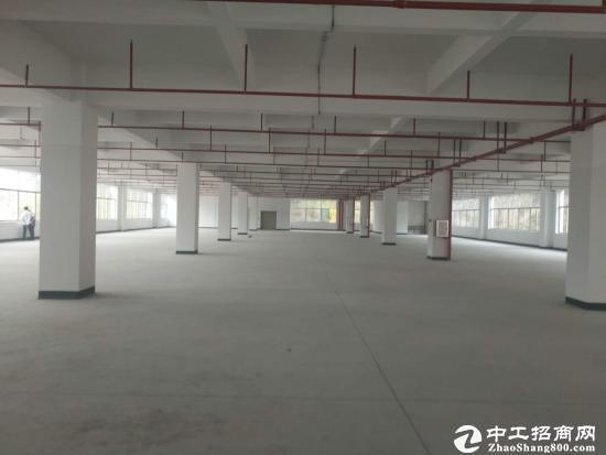 坪山新区石井比亚迪旁二楼厂房1200平米出租图片1