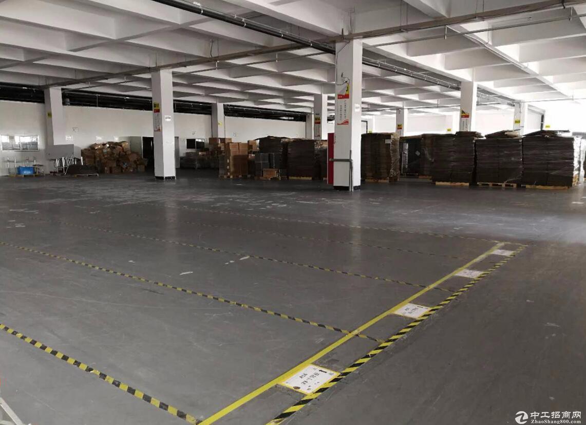 新站高新区6000平闲置厂房出租--可分割
