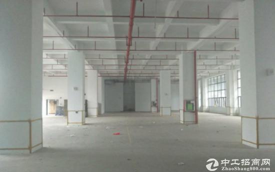 塘厦一楼1500平带红本厂房仓库出租,可分租-图3