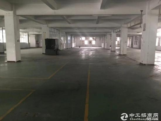 木棉湾一楼厂房仓库1000平米层高6米可分租