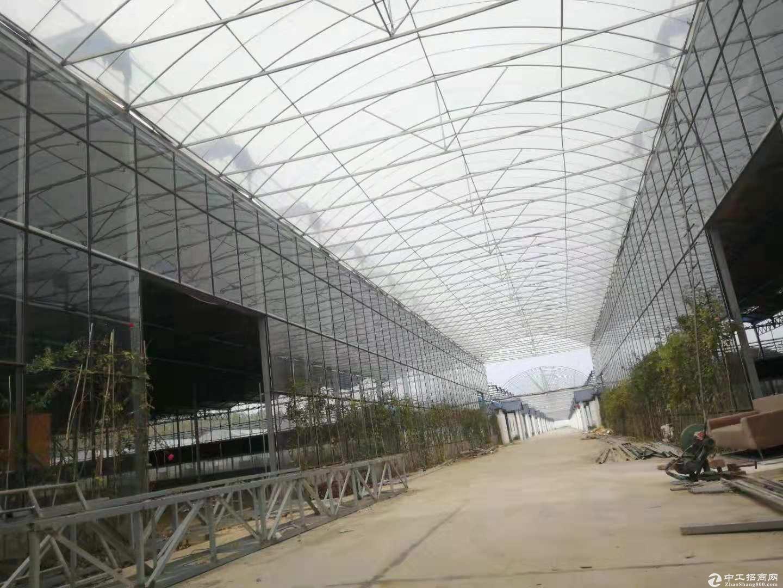 东西湖东柏路10000平米,钢结构仓库厂房,仓储均可