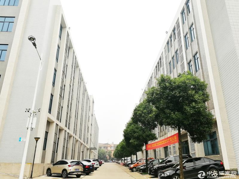 望城黄金创业园147平米办公厂房出租-图4