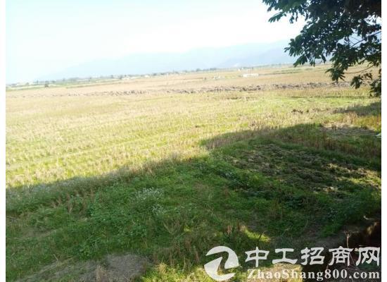 【出租】广东省开平市约230亩农...