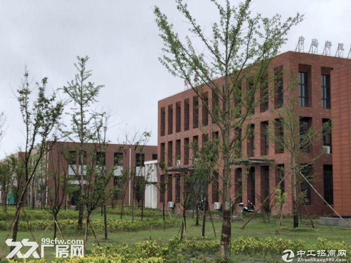 百强企业中南高科打造双凤标准化厂房  8.1米层高图片5