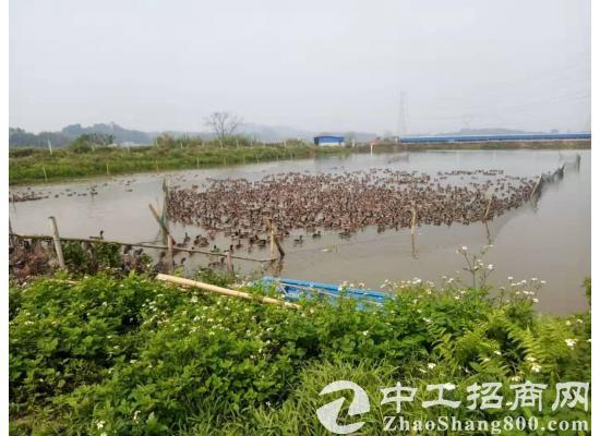 【转让】广东省四会市约830平方...