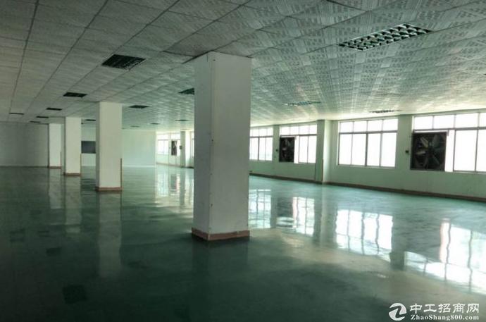 茶山原房东独院标准三层厂房3050平方,可分租