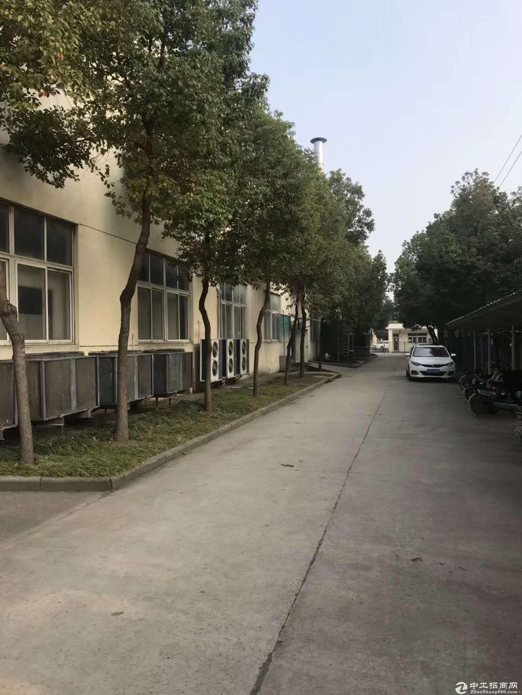 江宁自有独门独院单层厂房招租图片5