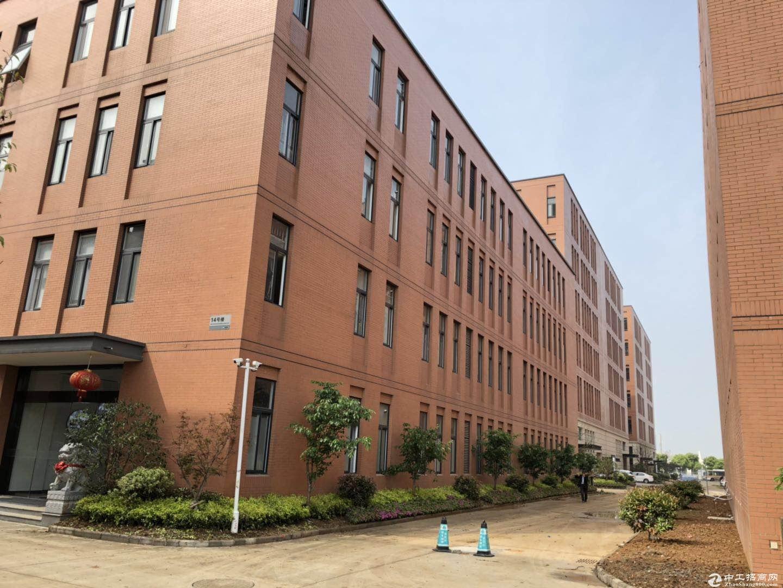 出售 新港全新花园式独栋厂房 两证齐全 (非中介)图片2