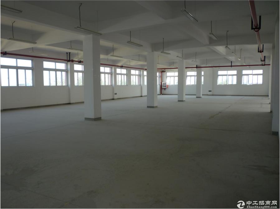 上海宝山罗店标准104厂房出租-图2