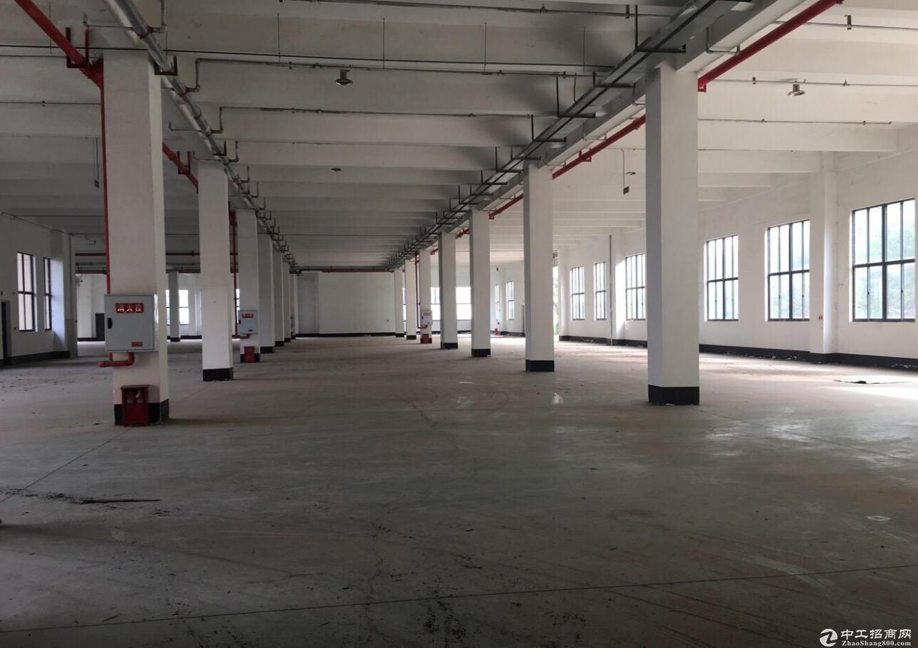 龙兴1楼厂房 层高7米 电力充足 22含票