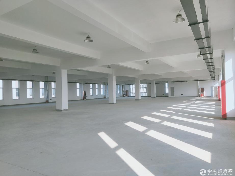 政府自建园区厂房 50年产权 可环评可分割 公寓食堂办公-图3