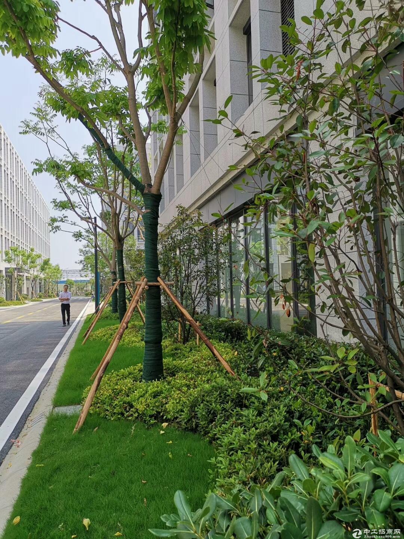 吴中重点项目 工业用地 产业聚集区 高架路旁 高标准 独立产证 首层7.2米 配套食堂宿舍-图6