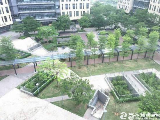 松岗原房东花园式写字楼 900平方研发办公图片2