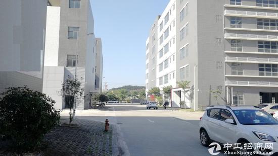 物业直租 坂田  地铁口电商产业园 241平4+1格局图片8